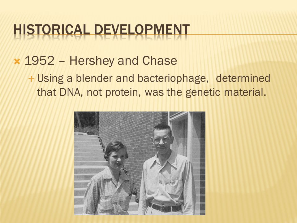  1952 – Hershey and Chase  Using a blender and bacteriophage, determined that DNA, not protein, was the genetic material.