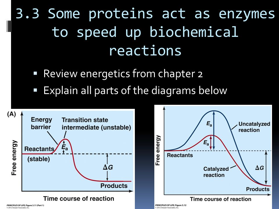 3.3 Some proteins act as enzymes to speed up biochemical reactions  Review energetics from chapter 2  Explain all parts of the diagrams below