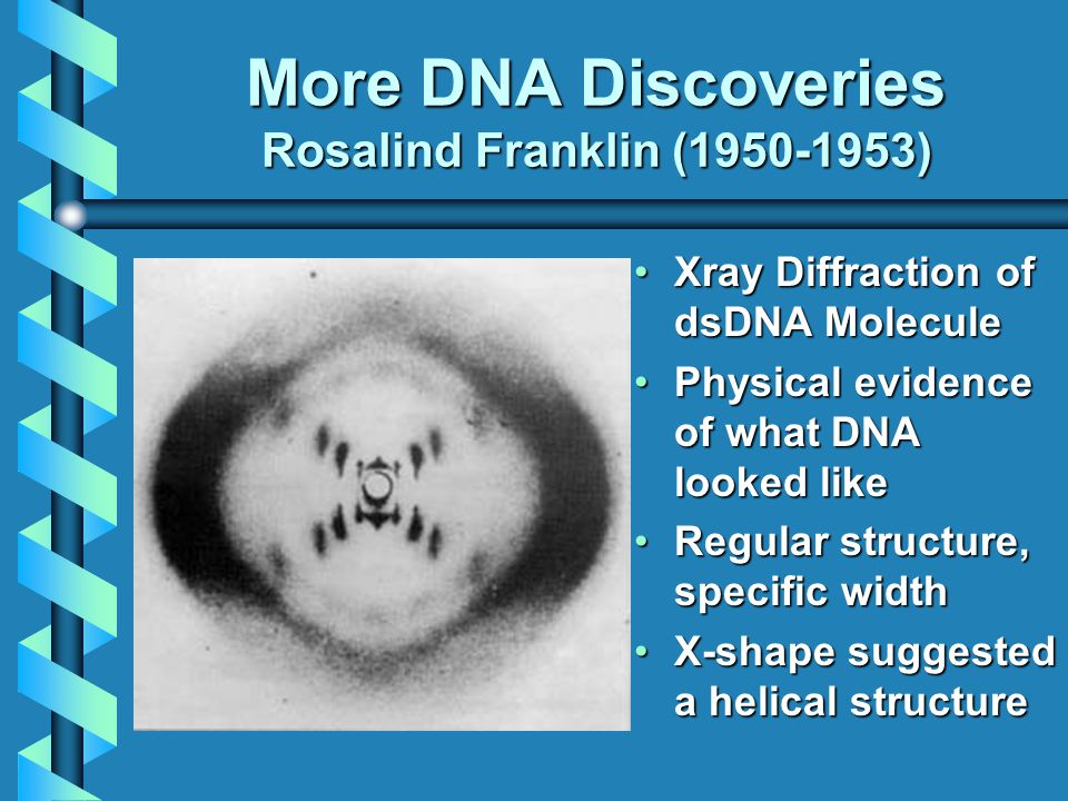 More DNA Discoveries Rosalind Franklin (1950-1953) Xray Diffraction of dsDNA Molecule Physical evidence of what DNA looked like Regular structure, specific width X-shape suggested a helical structure