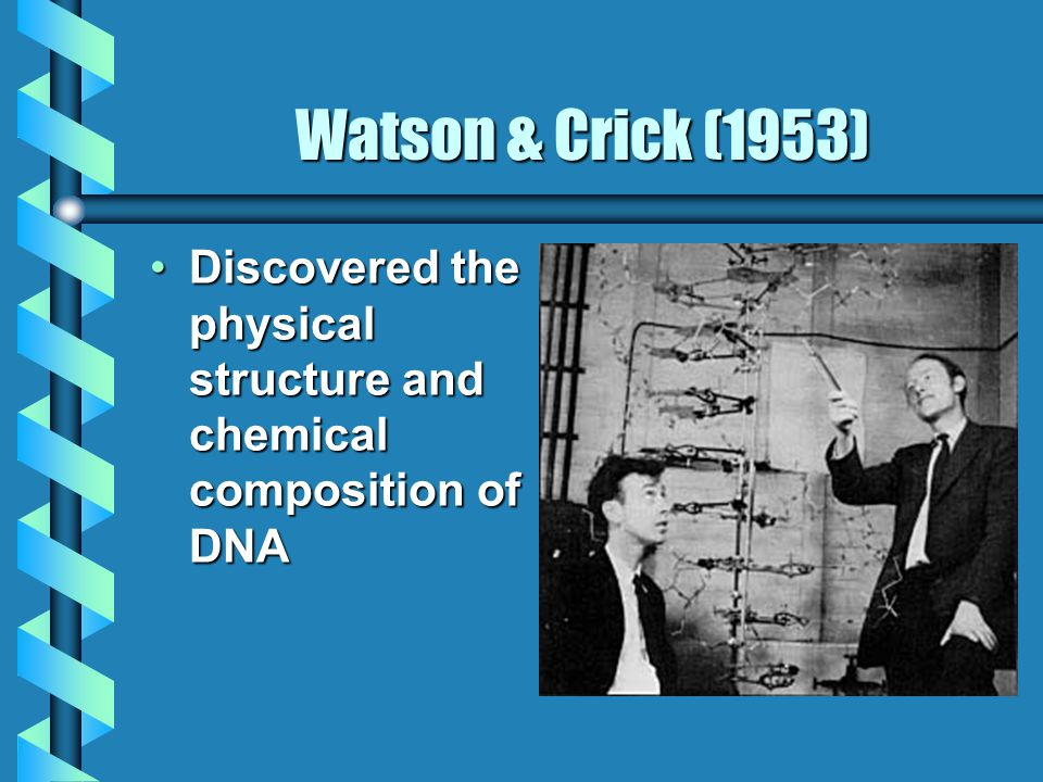 Watson & Crick (1953) Discovered the physical structure and chemical composition of DNADiscovered the physical structure and chemical composition of DNA