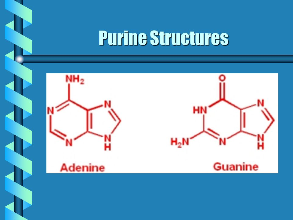 Purine Structures