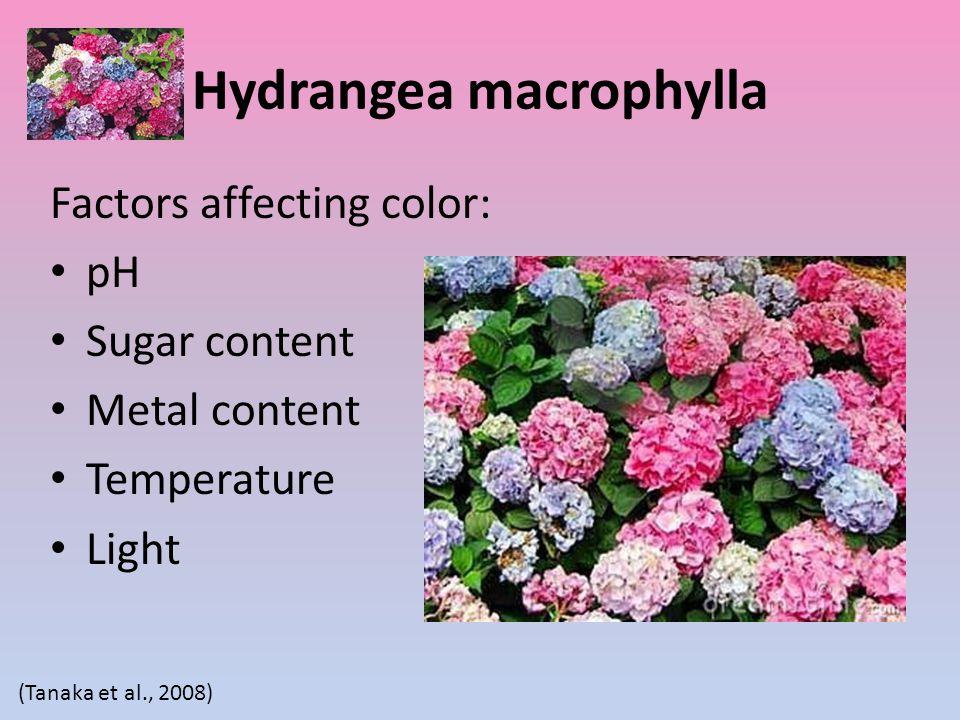 Hydrangea macrophylla Factors affecting color: pH Sugar content Metal content Temperature Light (Tanaka et al., 2008)
