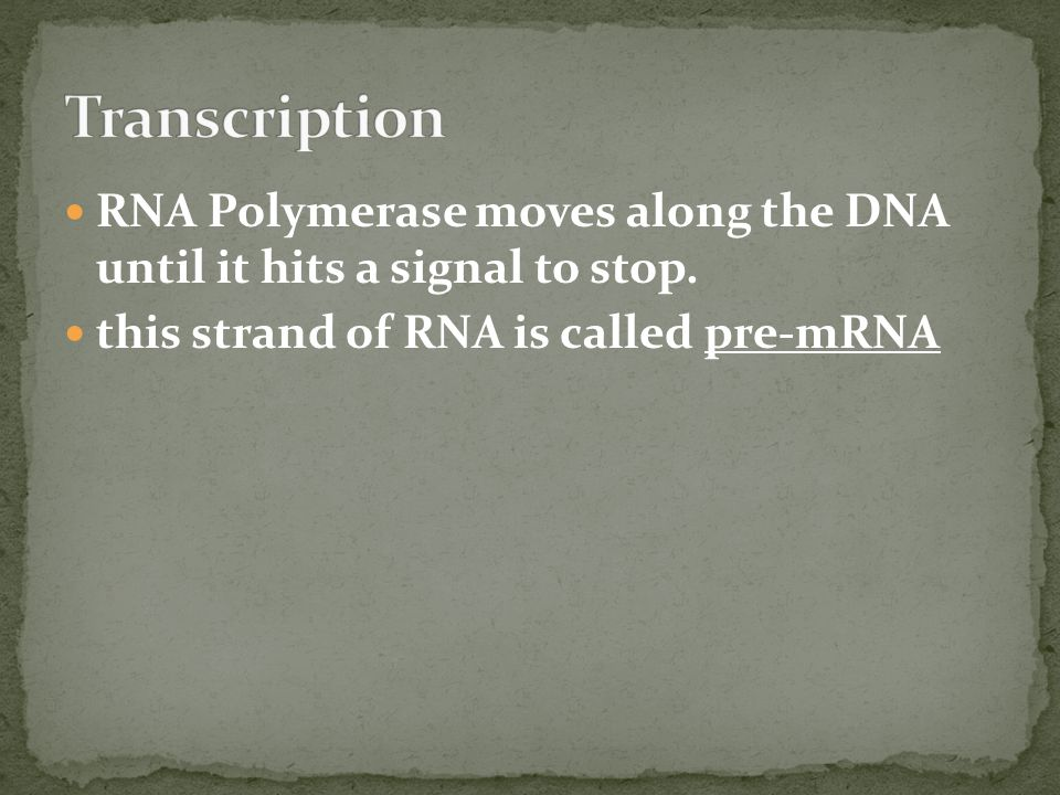 RNA Polymerase moves along the DNA until it hits a signal to stop.