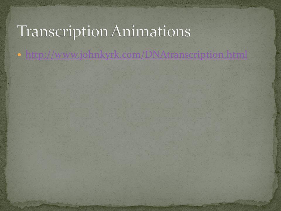 http://www.johnkyrk.com/DNAtranscription.html