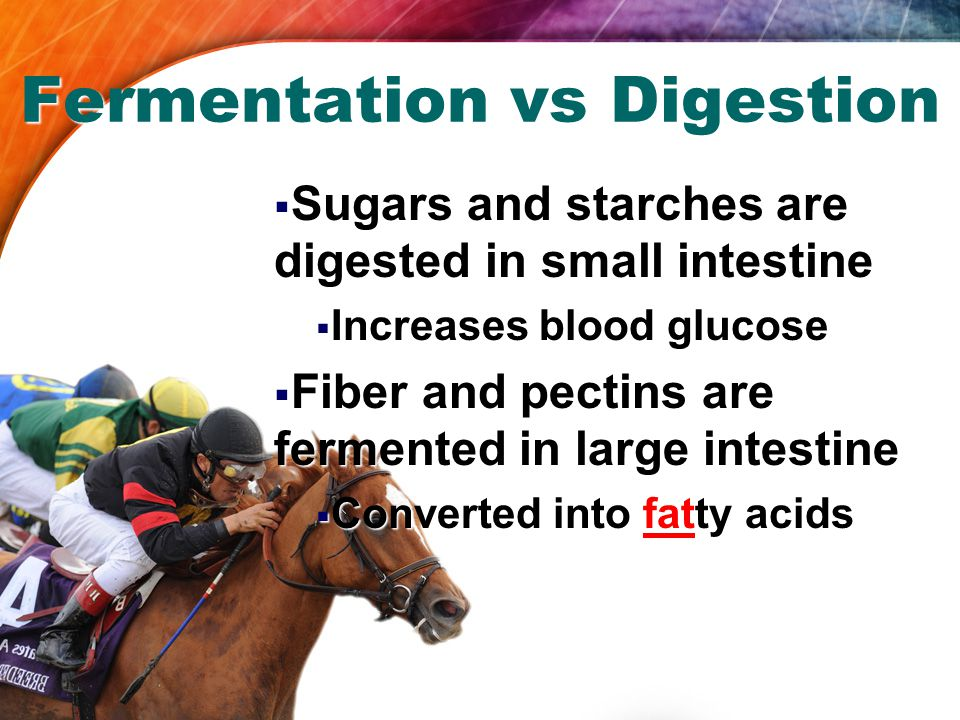 Fermentation vs Digestion  Sugars and starches are digested in small intestine  Increases blood glucose  Fiber and pectins are fermented in large intestine  Converted into fatty acids