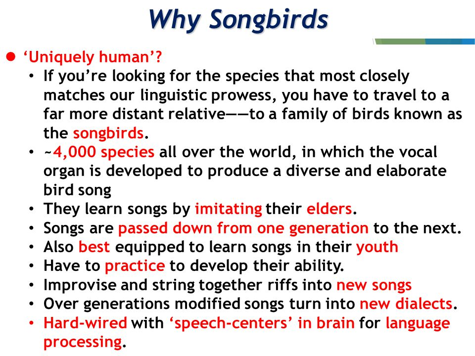 Genetics of Songs