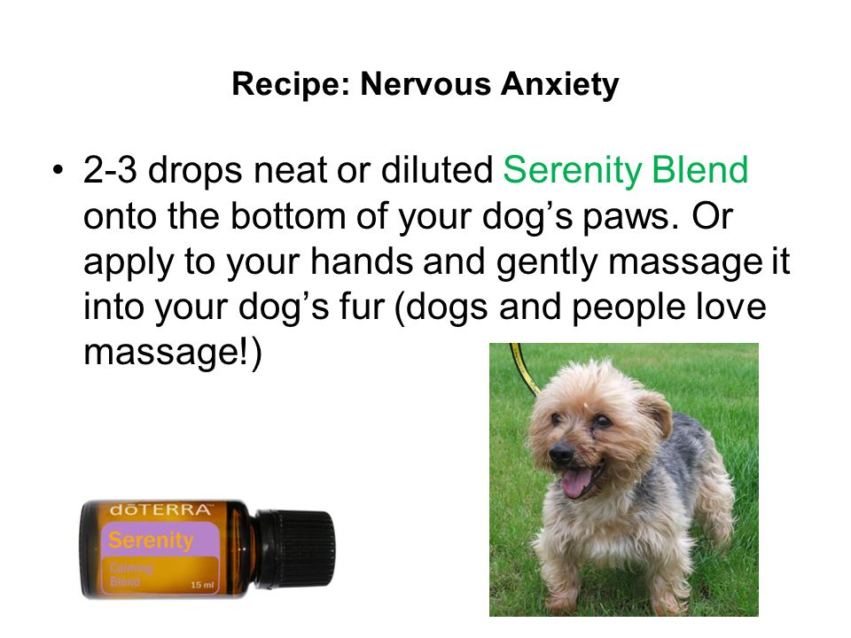 Recipe: Nervous Anxiety 2-3 drops neat or diluted Serenity Blend onto the bottom of your dog's paws.