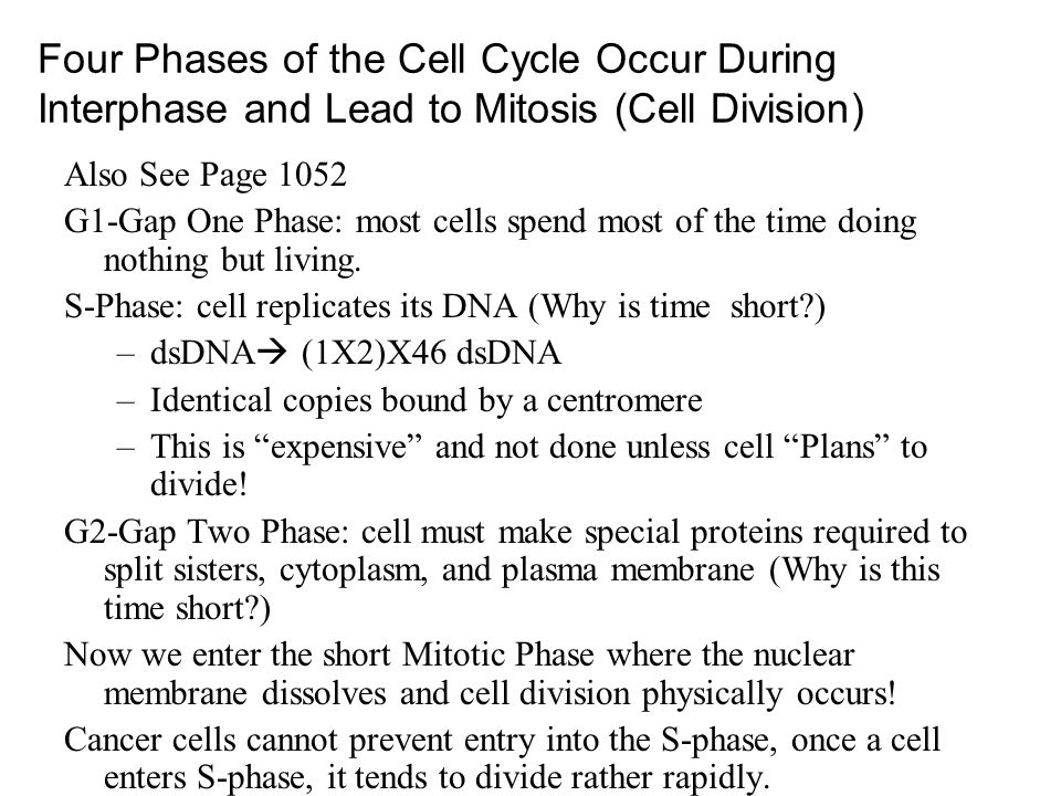 Four Phases of the Cell Cycle Occur During Interphase and Lead to Mitosis (Cell Division) Also See Page 1052 G1-Gap One Phase: most cells spend most o