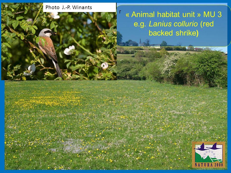 r « Animal habitat unit » MU 3 e.g. Lanius collurio (red backed shrike) Photo J.-P. Winants