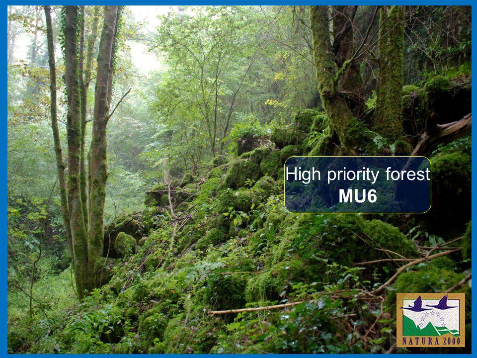 High priority forest MU6