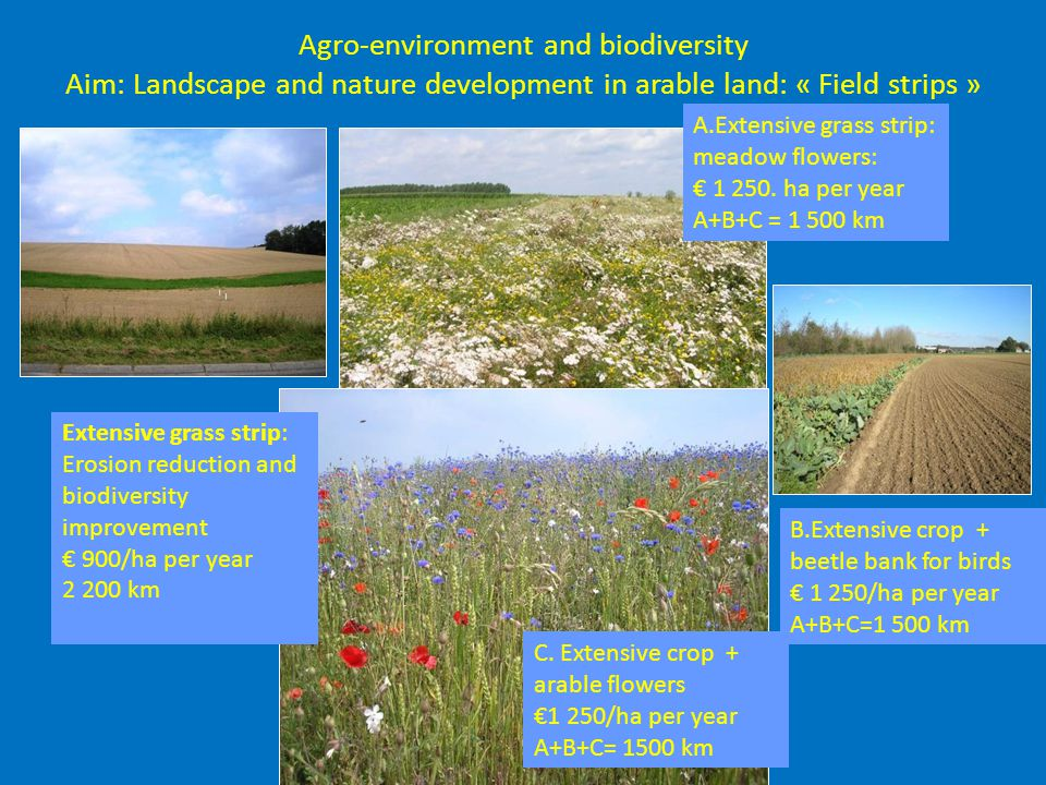 Agro-environment and biodiversity Aim: Landscape and nature development in arable land: « Field strips » Extensive grass strip: Erosion reduction and biodiversity improvement € 900/ha per year 2 200 km C.