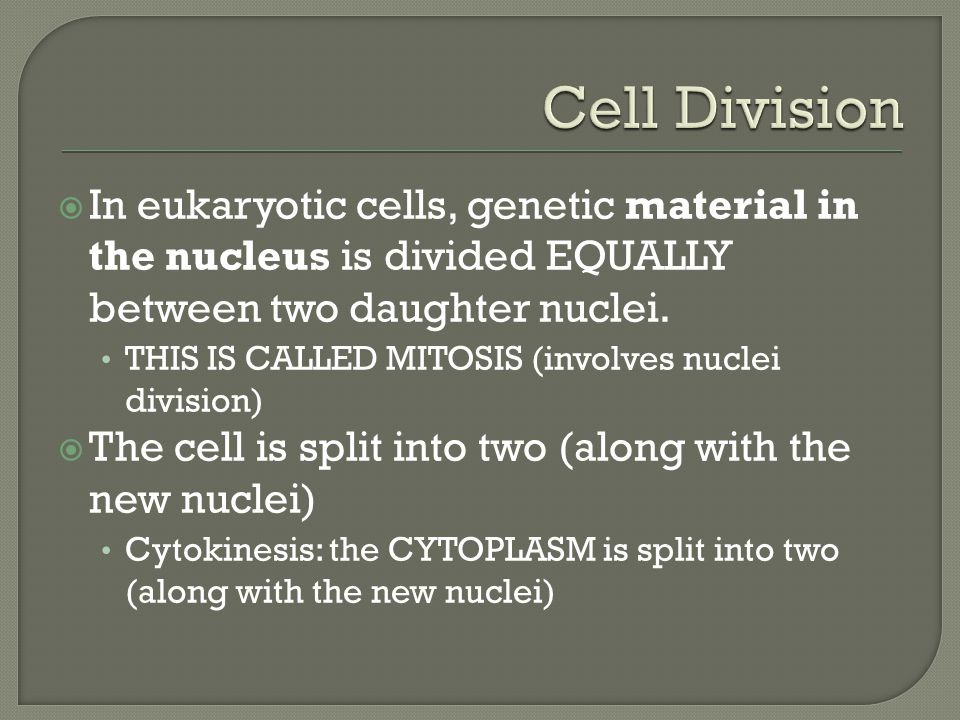  In eukaryotic cells, genetic material in the nucleus is divided EQUALLY between two daughter nuclei.