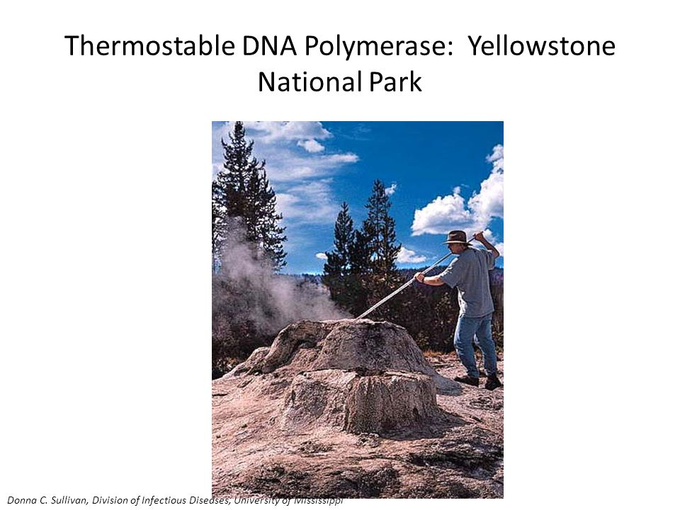 Thermostable DNA Polymerase: Yellowstone National Park Donna C.