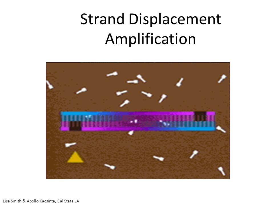 Strand Displacement Amplification Lisa Smith & Apollo Kacsinta, Cal State LA
