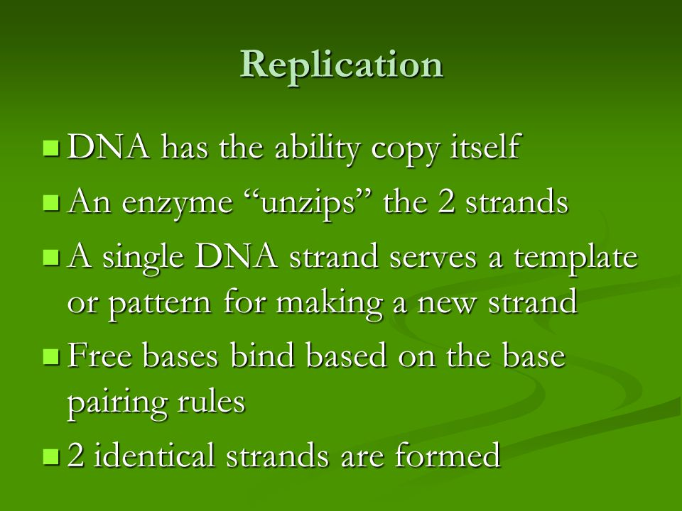 Replication DNA has the ability copy itself DNA has the ability copy itself An enzyme unzips the 2 strands An enzyme unzips the 2 strands A single DNA strand serves a template or pattern for making a new strand A single DNA strand serves a template or pattern for making a new strand Free bases bind based on the base pairing rules Free bases bind based on the base pairing rules 2 identical strands are formed 2 identical strands are formed