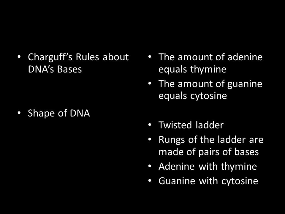 Charguff's Rules about DNA's Bases Shape of DNA The amount of adenine equals thymine The amount of guanine equals cytosine Twisted ladder Rungs of the