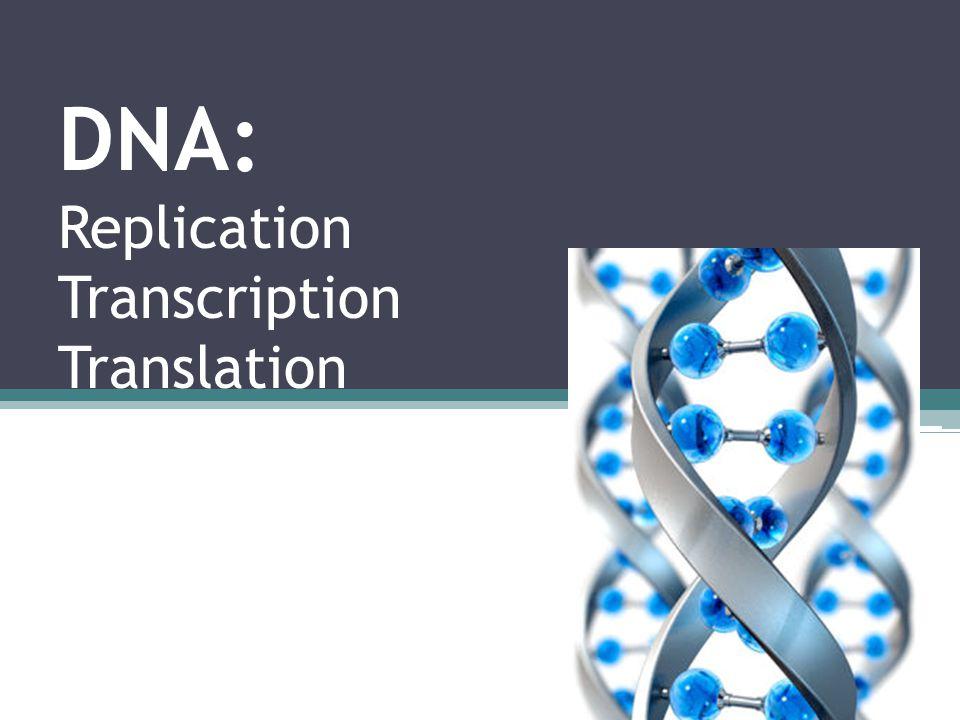 DNA: Replication Transcription Translation