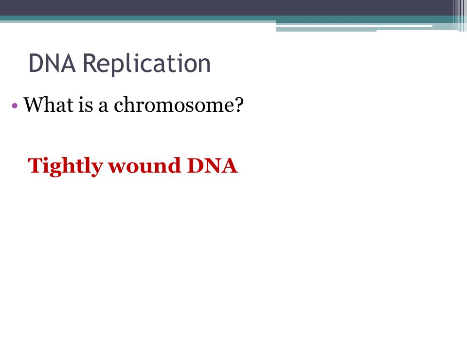 DNA Replication What is a chromosome? Tightly wound DNA