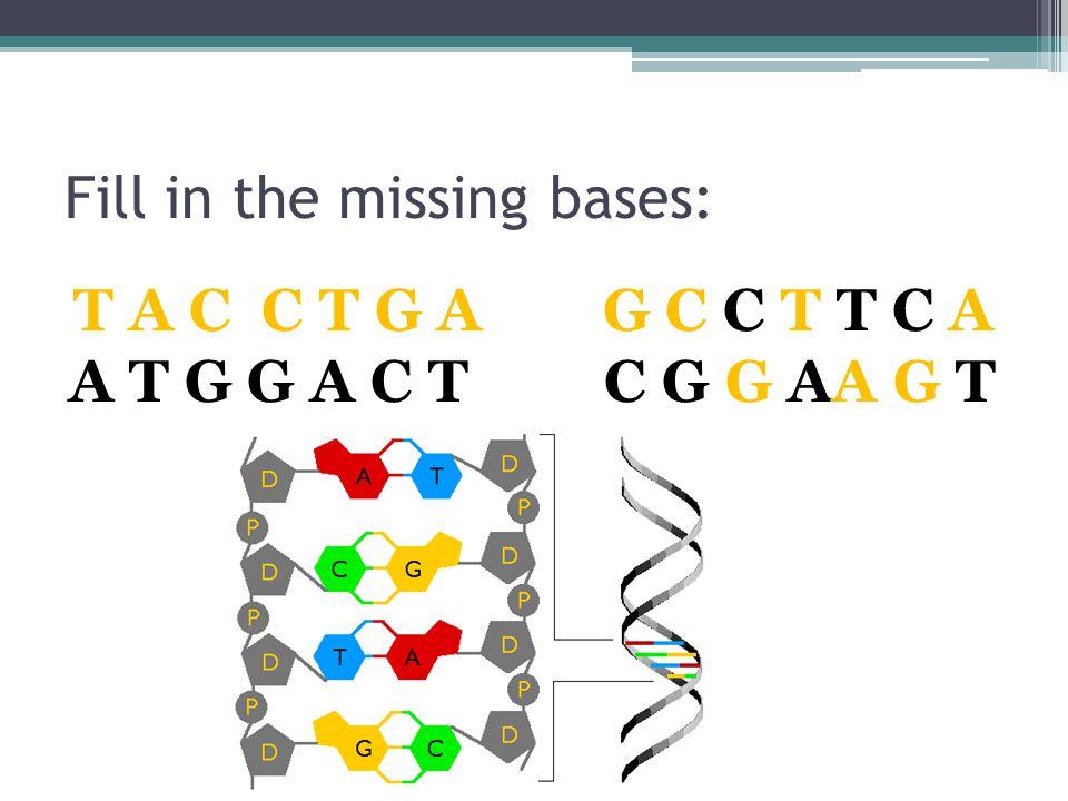 Fill in the missing bases: A T G G A C T C G G AA G T T A C C T G A G C C T T C A