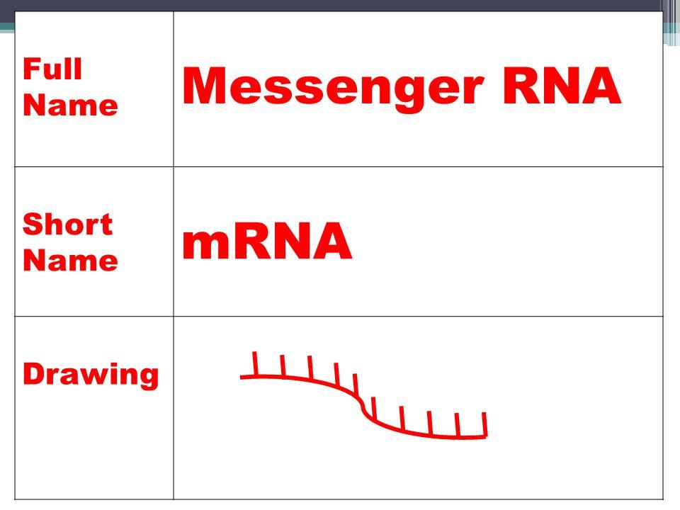 Full Name Messenger RNA Short Name mRNA Drawing