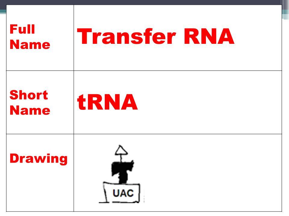 Full Name Transfer RNA Short Name tRNA Drawing