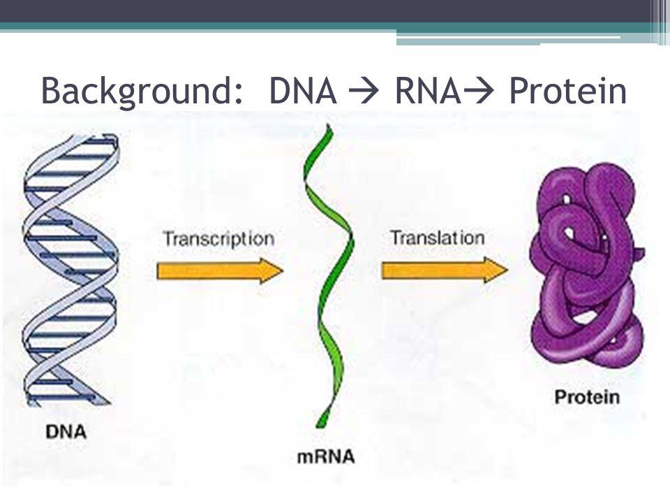 Background: DNA  RNA  Protein
