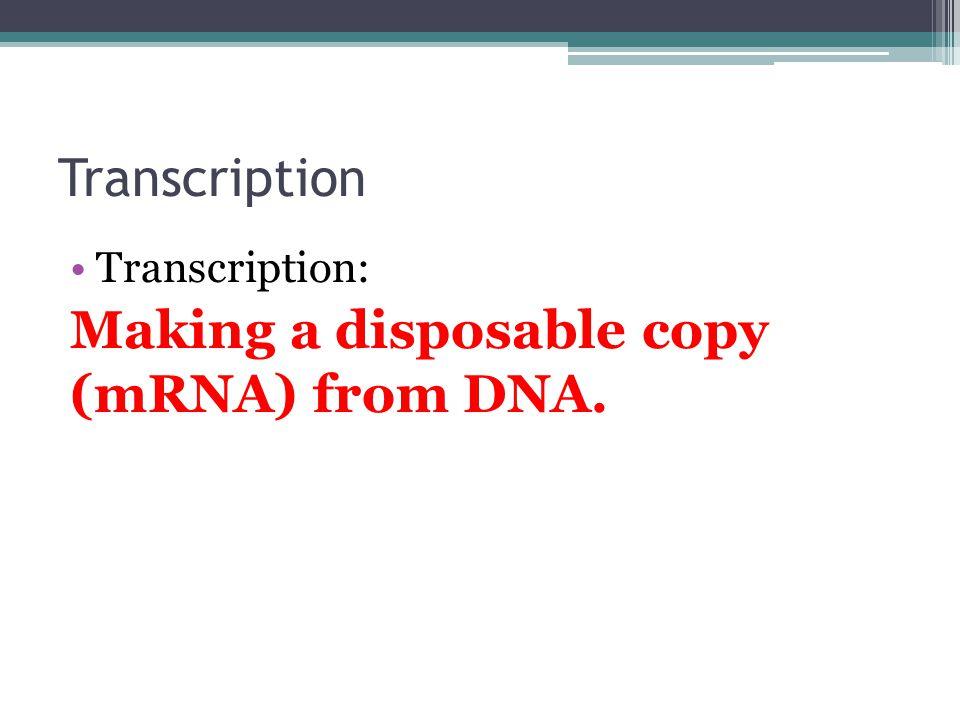 Transcription Transcription: Making a disposable copy (mRNA) from DNA.