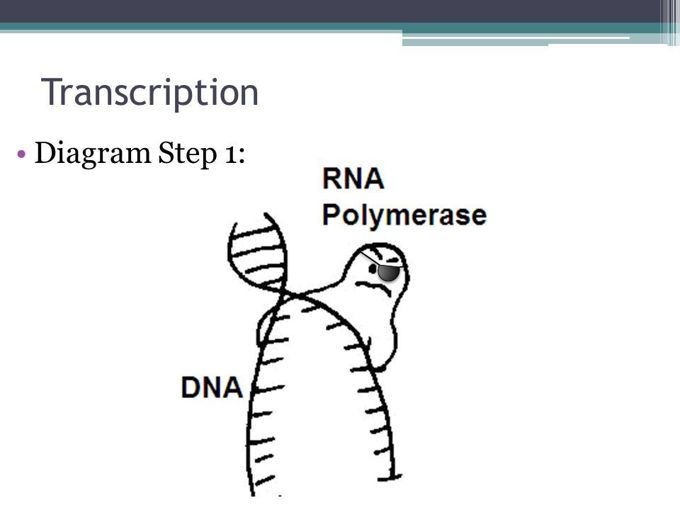 Transcription Diagram Step 1: