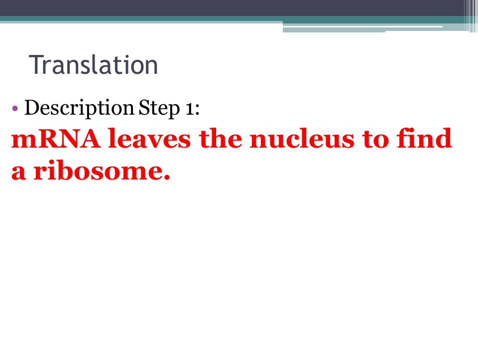 Translation Description Step 1: mRNA leaves the nucleus to find a ribosome.