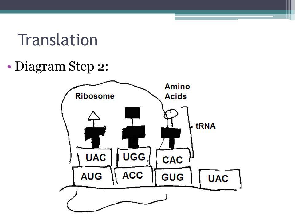 Translation Diagram Step 2: