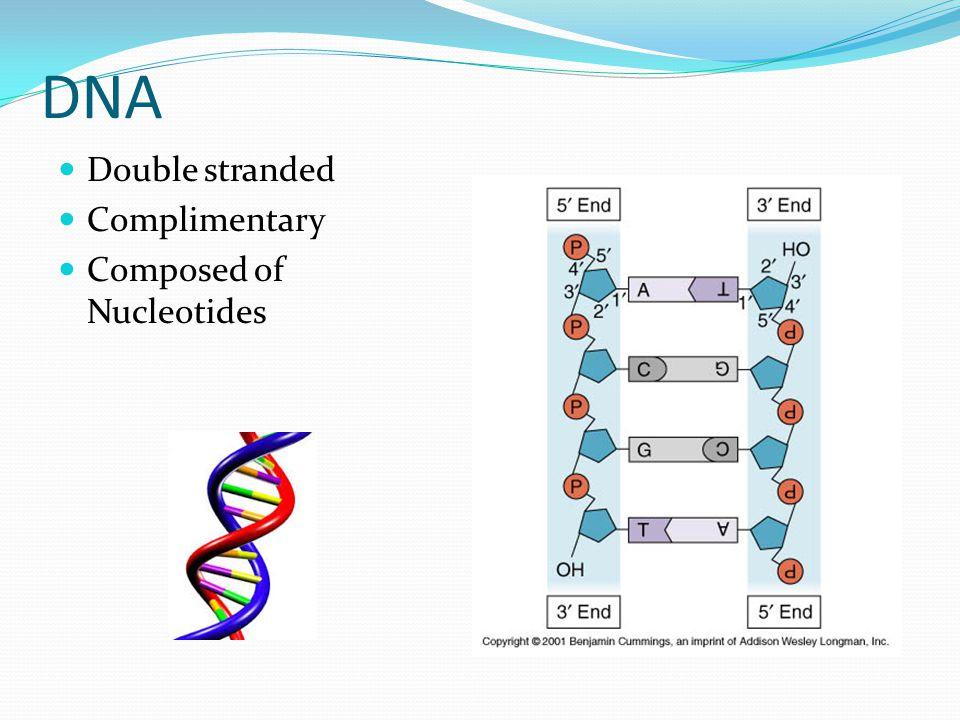DNA replication DNA Helicase – breaks hydrogen bonds holding complimentary strands together Forms replication fork Leading strand Lagging strand