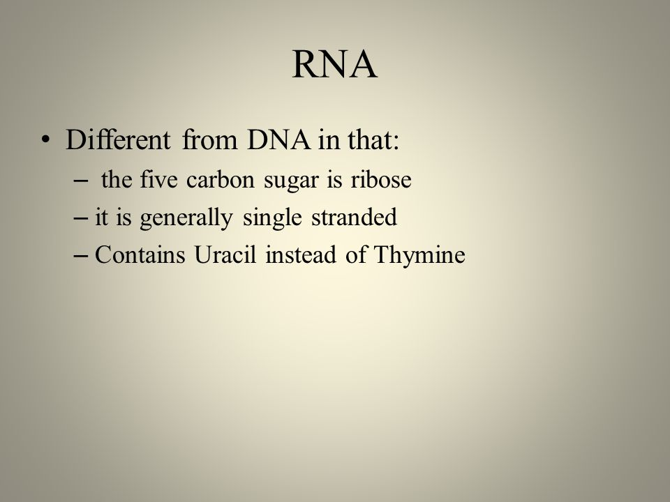 RNA Different from DNA in that: – the five carbon sugar is ribose – it is generally single stranded – Contains Uracil instead of Thymine