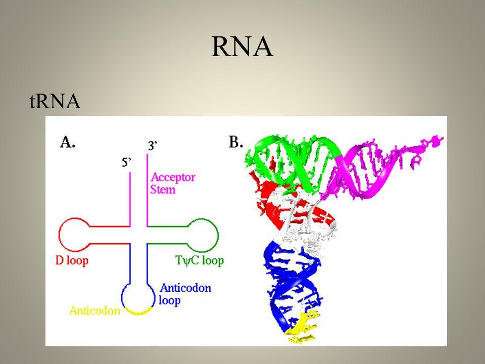 RNA tRNA