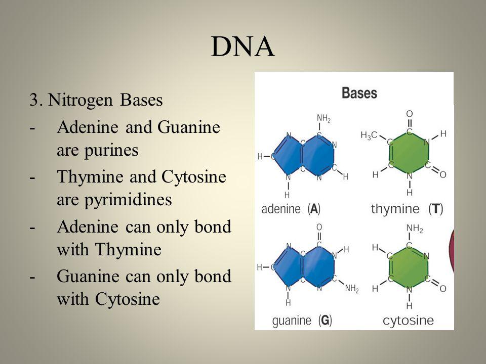 DNA 3.
