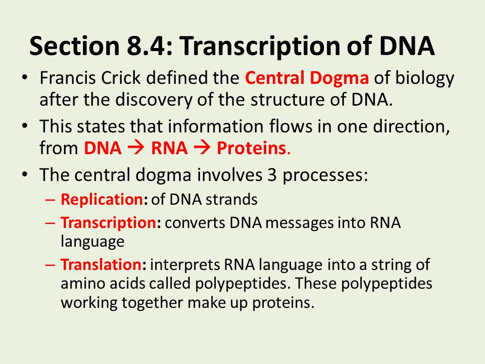 Section 8.4: Transcription of DNA Francis Crick defined the Central Dogma of biology after the discovery of the structure of DNA. This states that inf