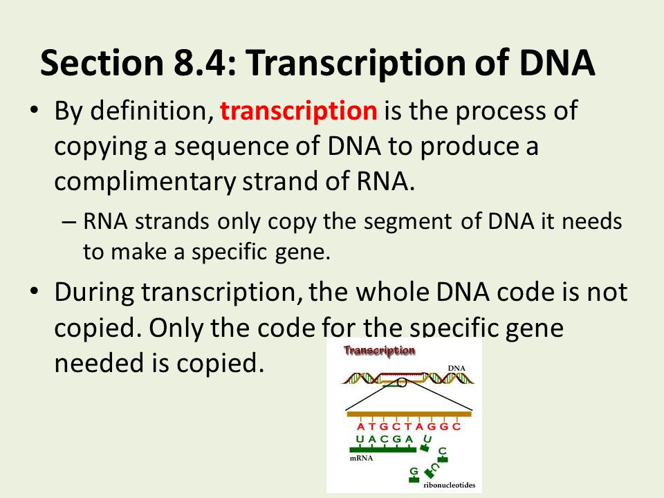Section 8.4: Transcription of DNA By definition, transcription is the process of copying a sequence of DNA to produce a complimentary strand of RNA. –