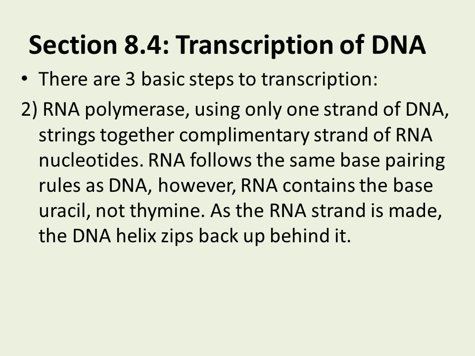 Section 8.4: Transcription of DNA There are 3 basic steps to transcription: 2) RNA polymerase, using only one strand of DNA, strings together complime