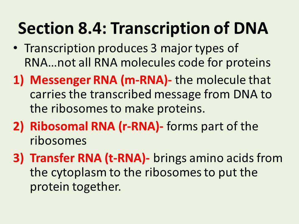Section 8.4: Transcription of DNA Transcription produces 3 major types of RNA…not all RNA molecules code for proteins 1)Messenger RNA (m-RNA)- the mol