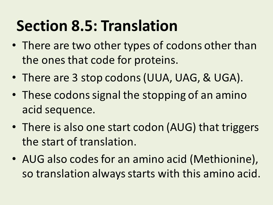 Section 8.5: Translation There are two other types of codons other than the ones that code for proteins. There are 3 stop codons (UUA, UAG, & UGA). Th