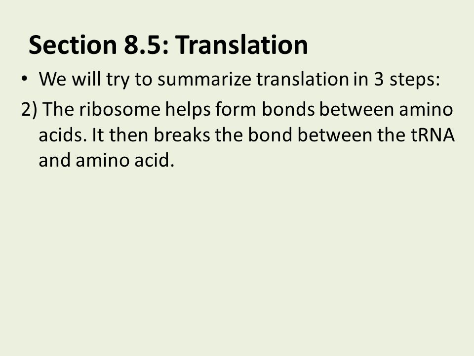 Section 8.5: Translation We will try to summarize translation in 3 steps: 2) The ribosome helps form bonds between amino acids. It then breaks the bon