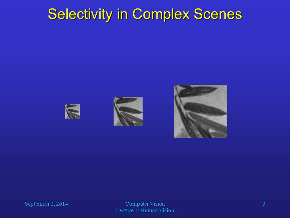 September 2, 2014Computer Vision Lecture 1: Human Vision 9 Selectivity in Complex Scenes