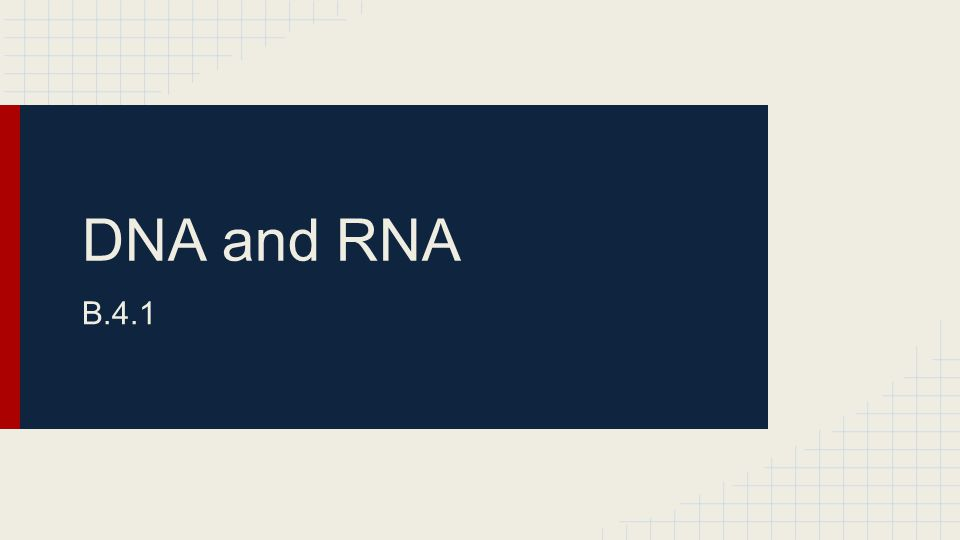 DNA and RNA B.4.1