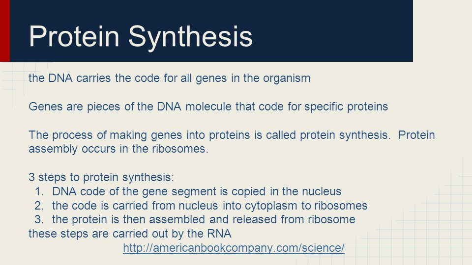 Protein Synthesis the DNA carries the code for all genes in the organism Genes are pieces of the DNA molecule that code for specific proteins The process of making genes into proteins is called protein synthesis.