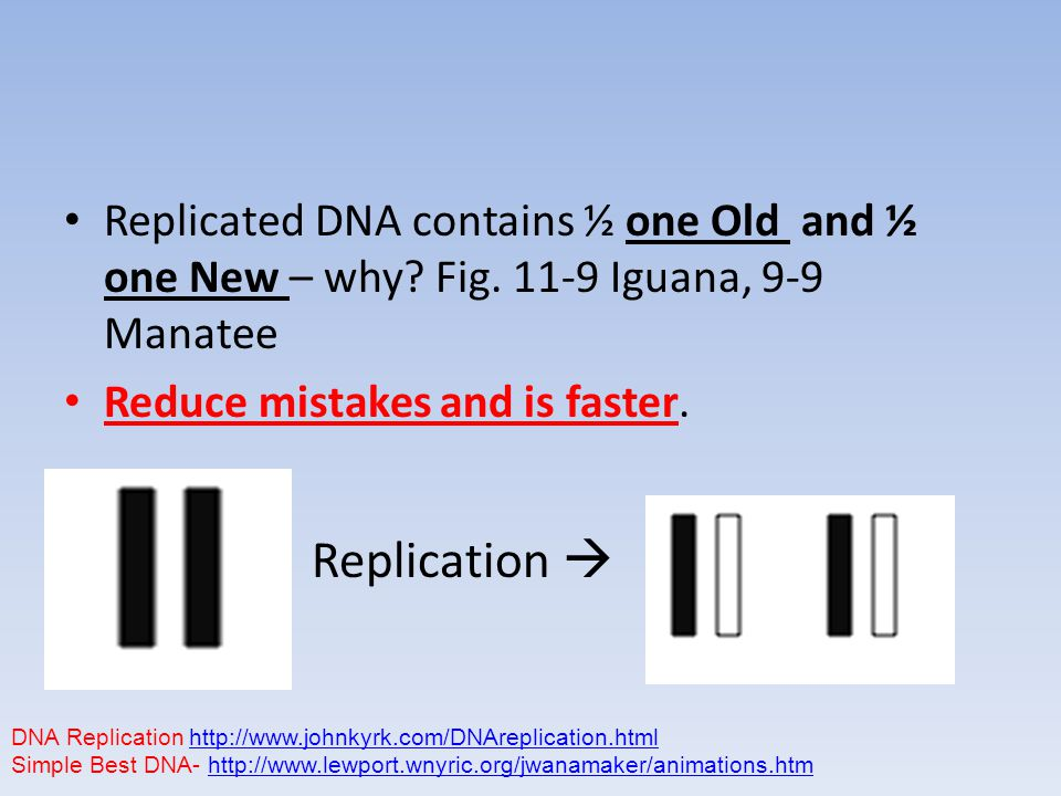 Replicated DNA contains ½ one Old and ½ one New – why.