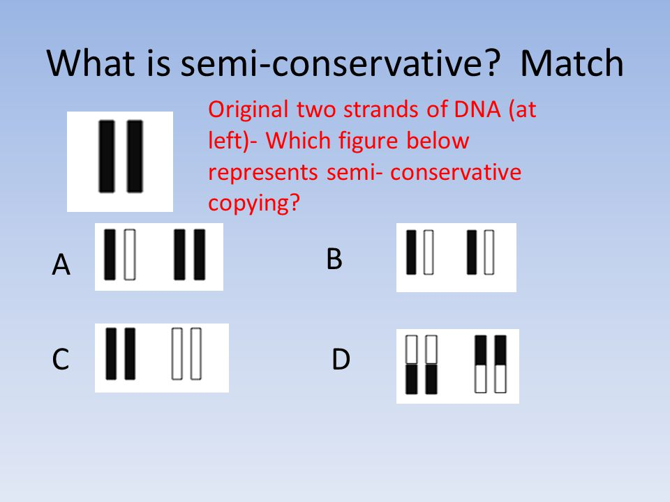 What is semi-conservative.