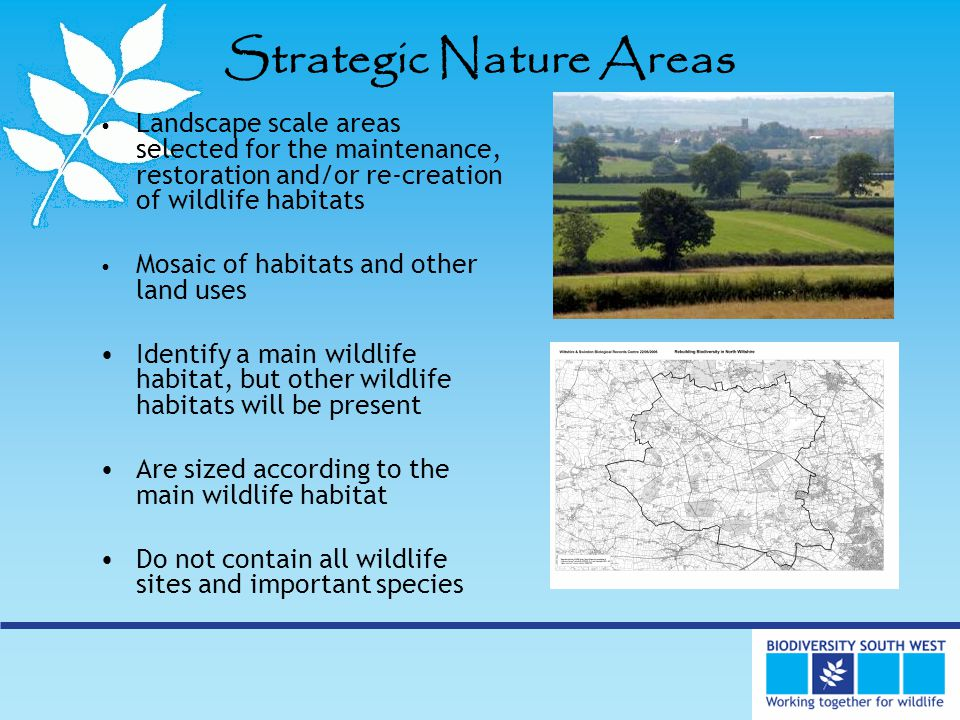 Strategic Nature Areas Landscape scale areas selected for the maintenance, restoration and/or re-creation of wildlife habitats Mosaic of habitats and other land uses Identify a main wildlife habitat, but other wildlife habitats will be present Are sized according to the main wildlife habitat Do not contain all wildlife sites and important species