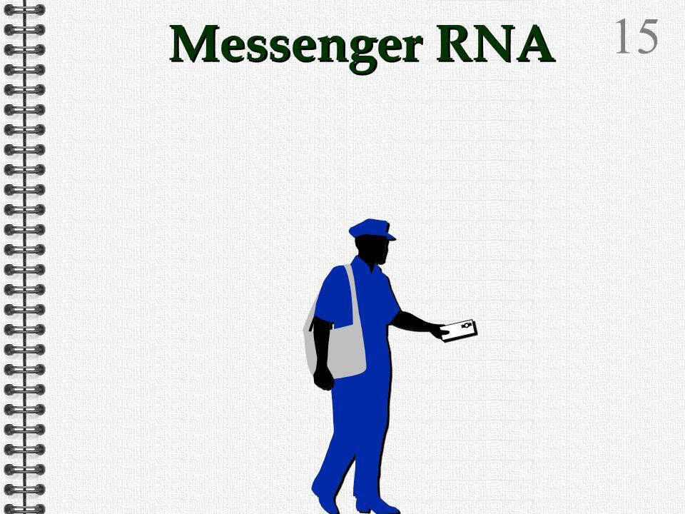 14 Ribonucleic AcidO OHH Sugar is Ribose Bases are: Adenine Guanine Cytosine Uracil RNA