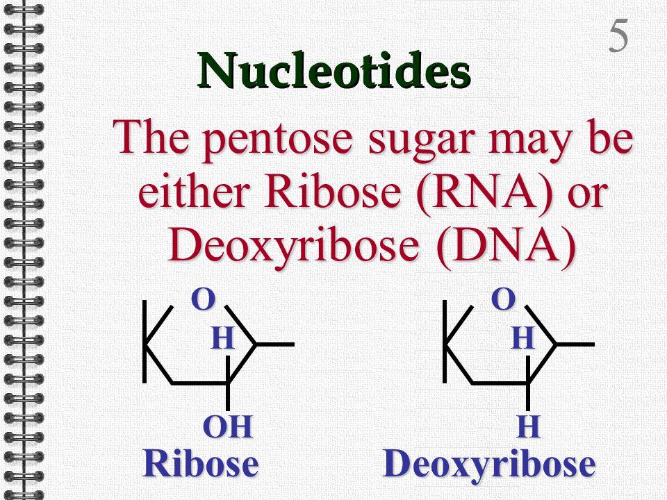 4 Nucleotides The phosphate group gives the nucleotide an acidic nature O O O-O- O-O- P