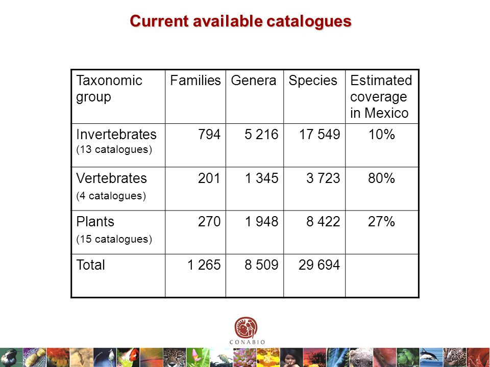 Current available catalogues Taxonomic group FamiliesGeneraSpeciesEstimated coverage in Mexico Invertebrates (13 catalogues) 7945 21617 54910% Vertebrates (4 catalogues) 2011 3453 72380% Plants (15 catalogues) 2701 9488 42227% Total1 2658 50929 694
