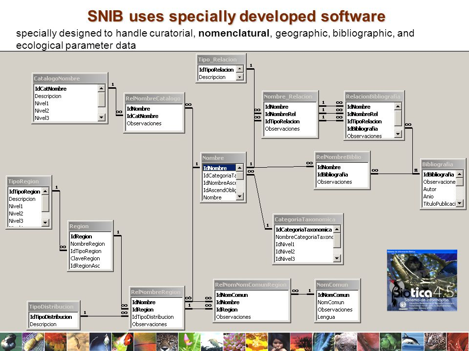 SNIB uses specially developed software specially designed to handle curatorial, nomenclatural, geographic, bibliographic, and ecological parameter data